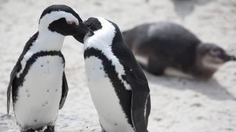 Adventure Aquarium Celebrates the Re-Opening of Penguin Park