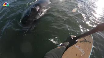 NJ Paddleboarder Captures Close Encounter With Whale