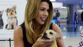 Celebs Support Clear the Shelters Day