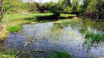 $38M Marshland Restoration Project