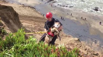 San Francisco Firefighters Rescue Precariously Perched Pooch