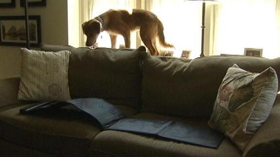 Dawn's Pet Project: Doggie Bad Behavior Deterrants