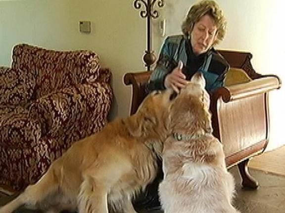 Meet the Animal Communicator