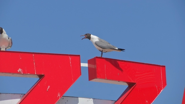 Ocean City Pushes to Keep Food Away From Seagulls