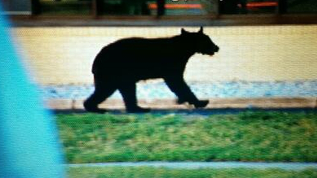 Bear Sightings in NJ