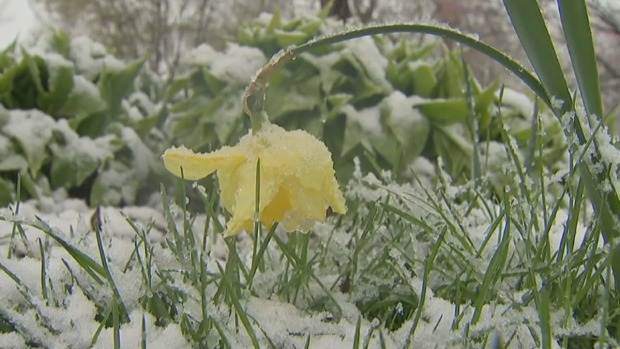 Residents Deal With Springtime Freeze