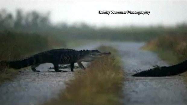 [NATL-DFW] Gators on Parade in Florida