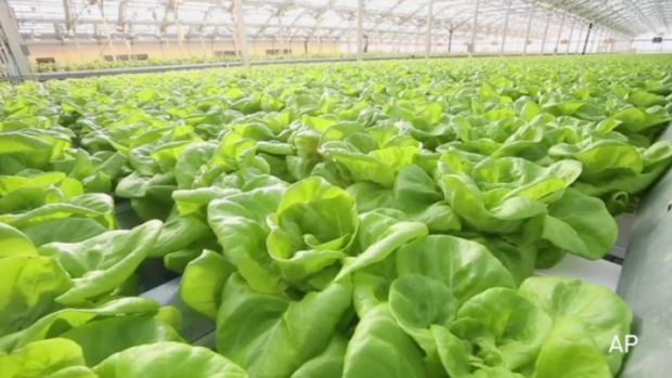 [NATL-USE THIS ONE] Largest Rooftop Greenhouse in World Is in Chicago