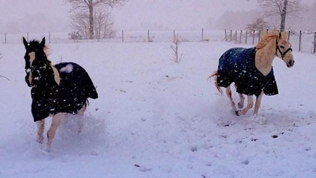 [PHI] Your February Snow Photos
