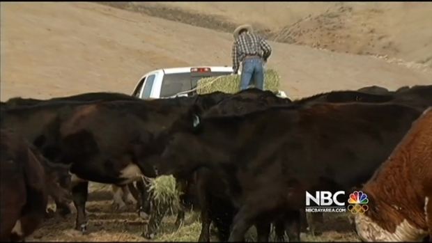 [BAY] Drought Impacting California Cattle Industry