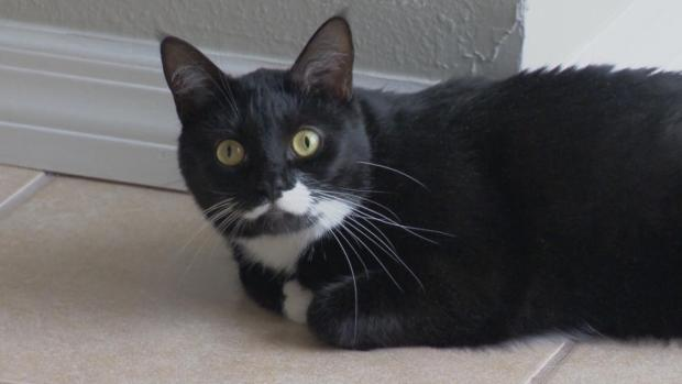 [NATL-DFW] Cat Saves Couple From Carbon Monoxide Poisoning