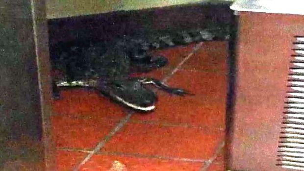 [NATL] Man Throws Live Alligator Into Wendy's Drive-Thru