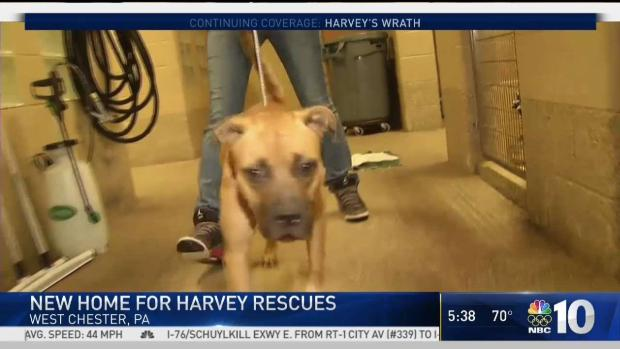 [PHI] Chester County SPCA Brings in Animals Saved From Harvey