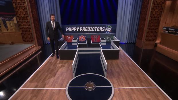 [NATL] 'Tonight': Puppies Predict the 2019 Final Four Championship