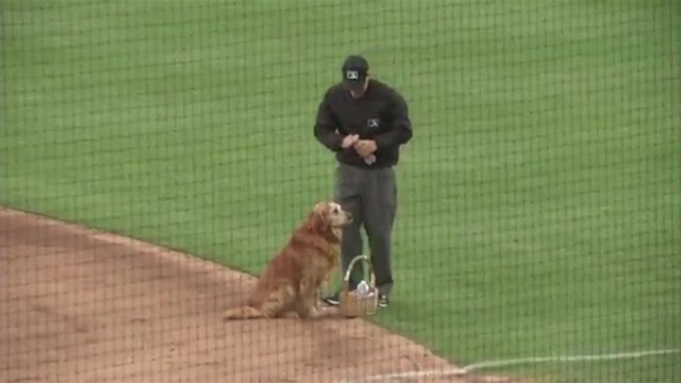 [NATL] Dog Delivers Basket of Water on Baseball Field