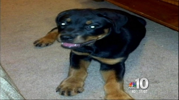 [PHI] Puppy Poisoned to Death in NJ