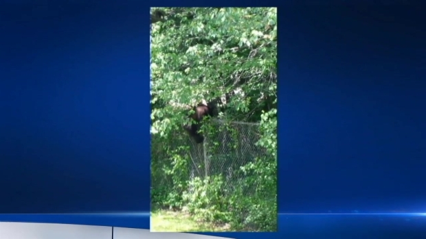 [PHI] Bensalem Bear on the Loose