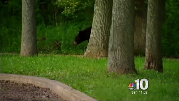 [PHI] Bear on the Run in Bucks County