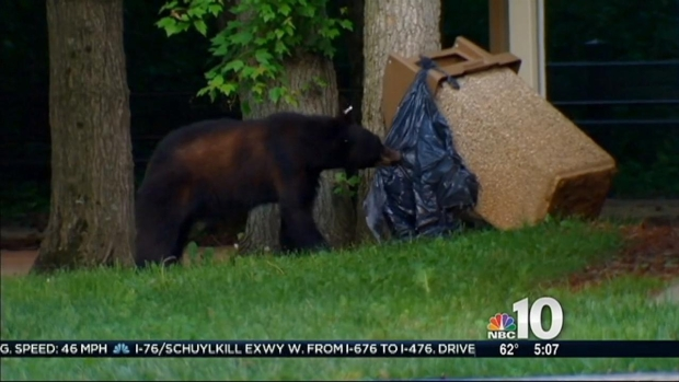 [PHI] Bucks County Bear Roams