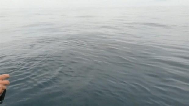 [PHI] RAW VIDEO: Great White Shark