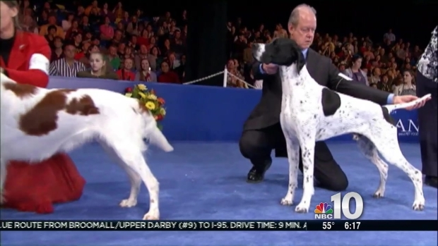 [PHI] National Dog Show Prep in Montco