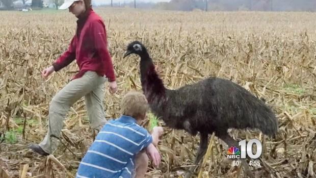 [PHI] Runaway Emu in Delaware
