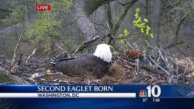 WATCH: Cameras Catch Birth of Second Eaglet in Washington ...