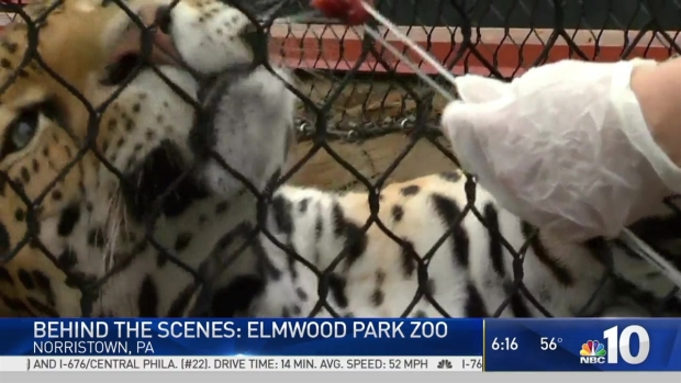 Behind The Scenes: Elmwood Park Zoo