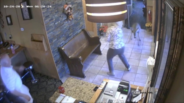 Oh, deer! Animal makes surprise visit to Aspen Cafe