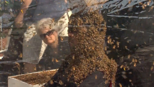 [NATL] Un-Bee-Lievable! Canadian Man Sets New Bee Beard Record