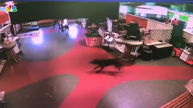 [NATL] Dog Runs Away From Home to Be With Daycare Friend
