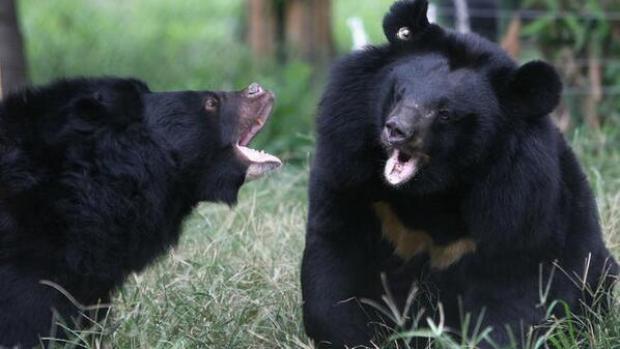 [PHI] Bear Sighting