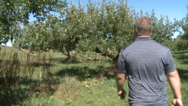 [NATL] Over 50,000 Apples Stolen From Indiana Farm