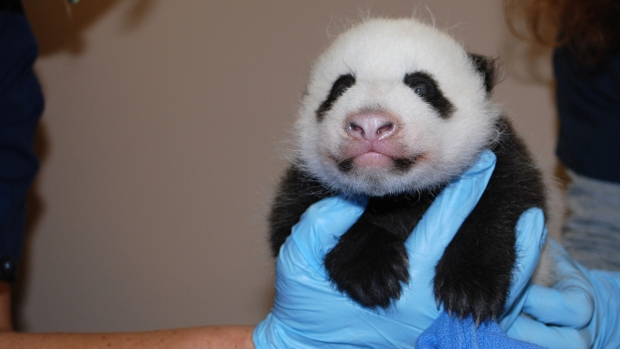 PHOTOS: Bao Bao, DC Zoo Panda, Through the Years