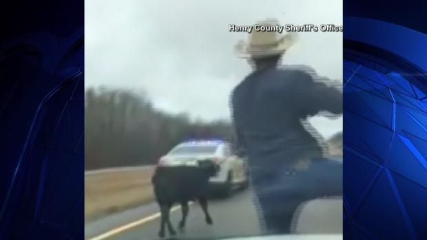 [NATL-DFW] Cowboy Ropes Calf From Sheriff's Car Hood