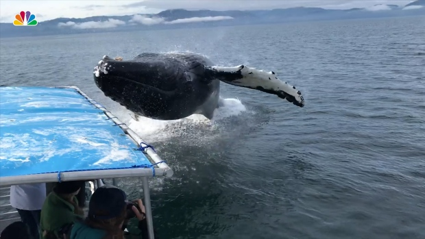 [NATL] Whale Surprises Tour Boat, Drenches Everyone on Board