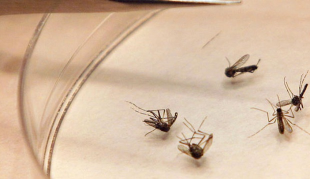 [PHI] 3 Deaths From West Nile Virus