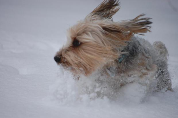 Your Pictures: Snow Day Pets