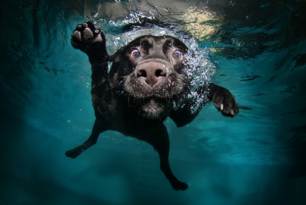 Underwater Dog Photos Make a Splash