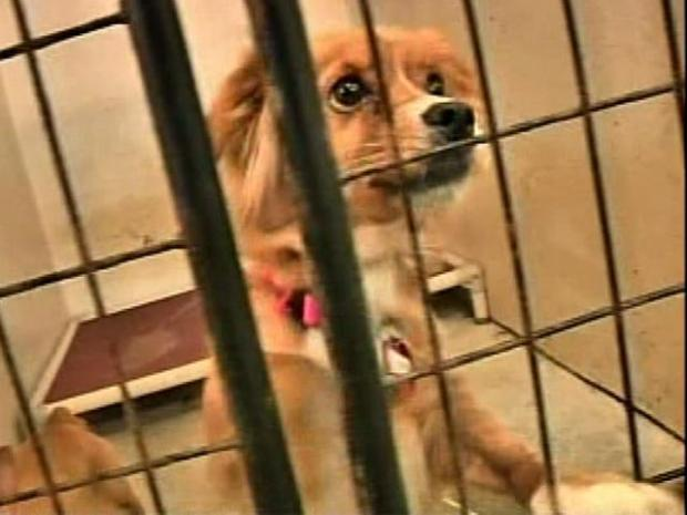 [PHI] Pa. Shelters Overrun as Kennels Close