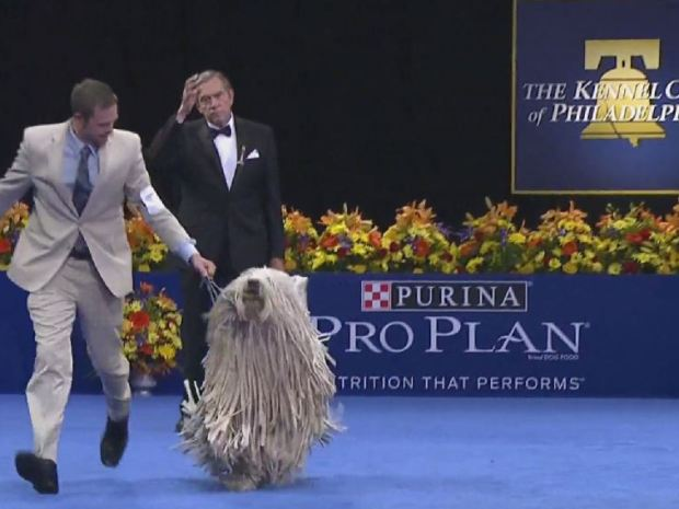 [PHI] National Dog Show's in Town
