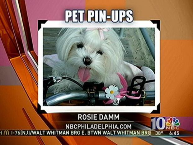 [PHI] Pet Pin-Ups: The Damm Dogs