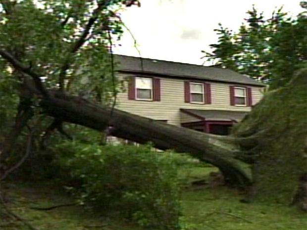 [PHI] Wild Weather Topples Trees, Power Lines
