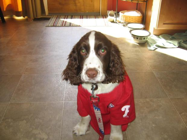 Phillies Phever Pictures: Pets