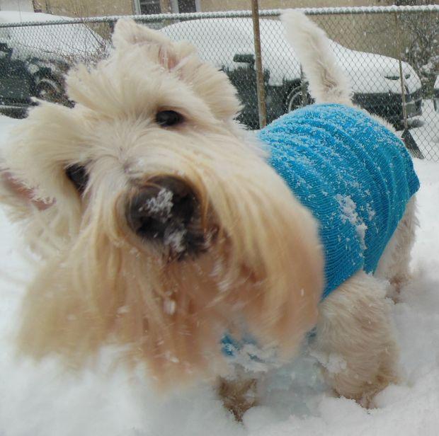 Snow Pets