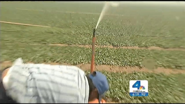 [LA] Strawberry Workers Fired After Leaving Work Because of Fire