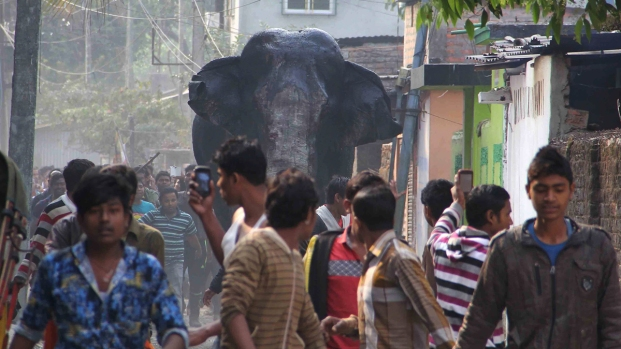 [NATL] People Flee As Elephant Runs Through Town, Smashes Homes