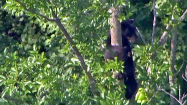 [PHI] Bucks County Officials Capture Black Bear