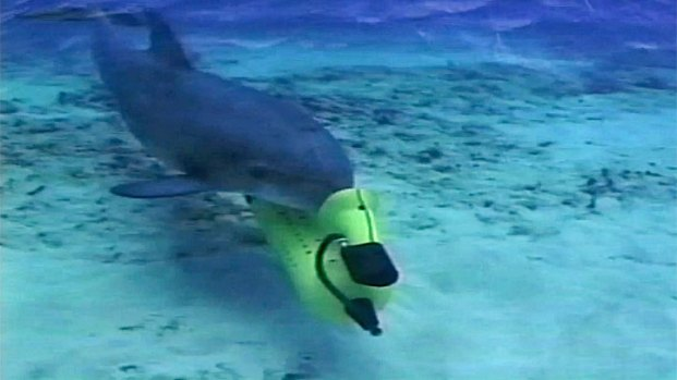 [DGO] Navy-Trained Dolphins Search for Bombs