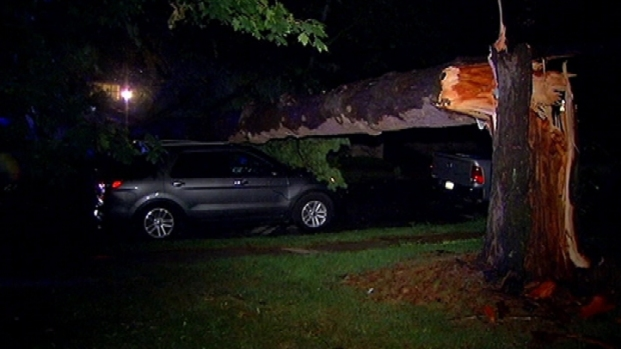 [PHI] Tree Falls On Car in Roxborough